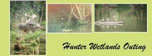 hunter-wetlands
