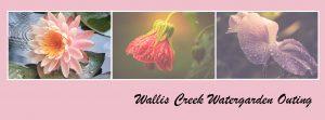 wallis-creek-outing